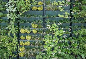 Air Purifying Green Facade