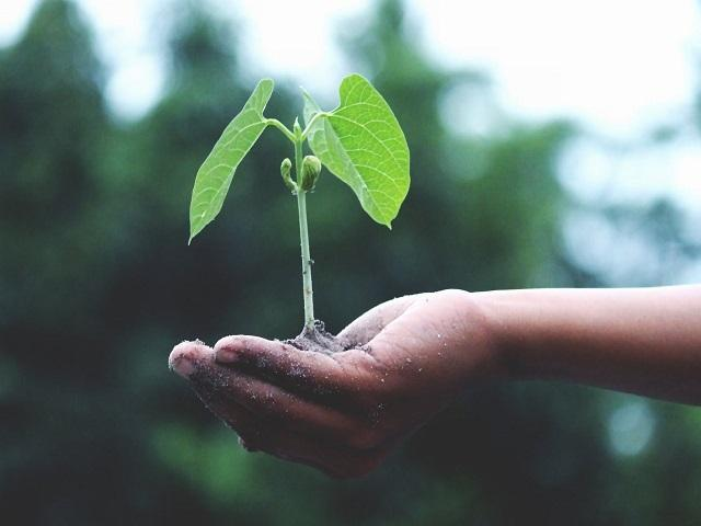 Need a hand with finding the right green solutions for your city?