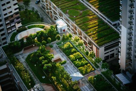 All You Need to Know About Green Roof Construction