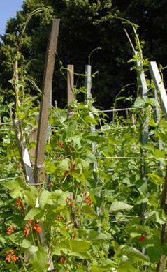Roubaix agriculture urbaine
