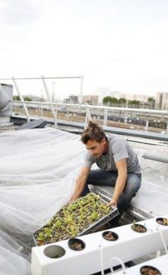 Agriculture urbaine, potager, permaculture