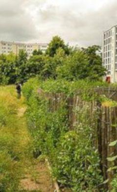 Agriculture urbaine, potager, jardin, gouvernance alimentaire