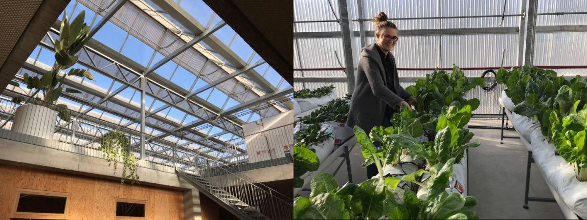 serre,toit,agriculture urbaine,production végétale,horticulture,ville durable