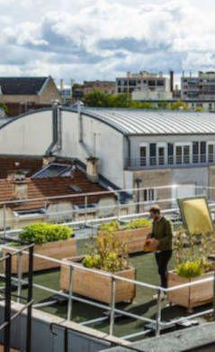 agriculture urbaine, mode, durable