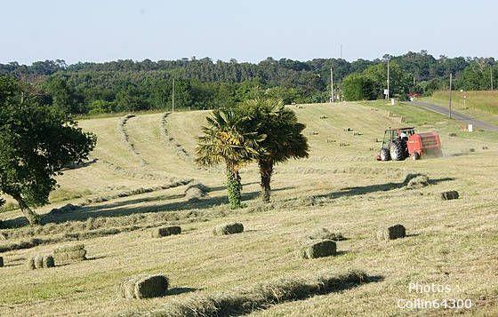 #5 Valoriser les terres de chantiers propres par l'agriculture
