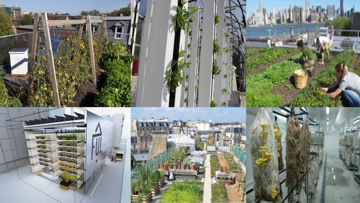ferme urbaine, agriculture urbaine, permaculture, modèle économique