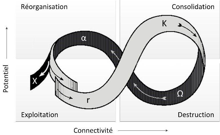 résilience urbaine : cycle adaptatif