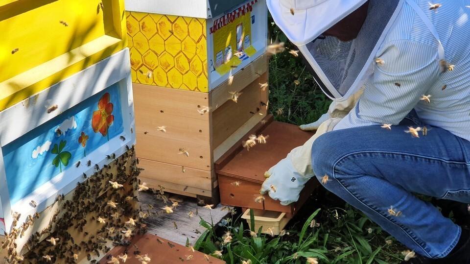 Les abeilles et la technologie au service de la biodiversité