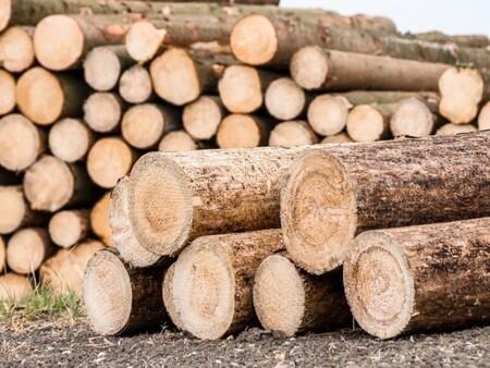 Export de bois : les Coopératives forestières proposent de sécuriser l'approvisionnement