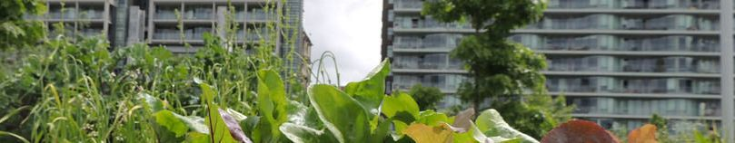 Dossier Agriculture Urbaine